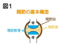 関節の基本構造